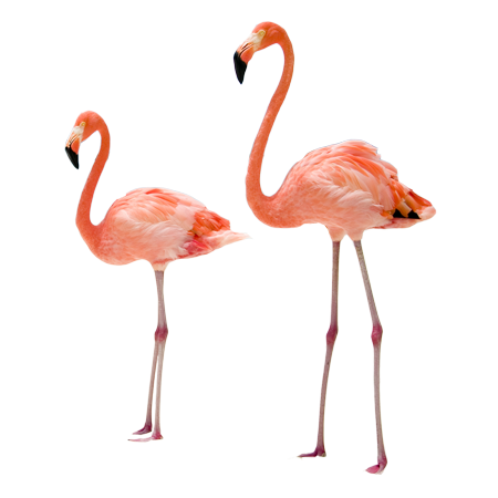 stickers-flamants-roses-1-R1-63921-1